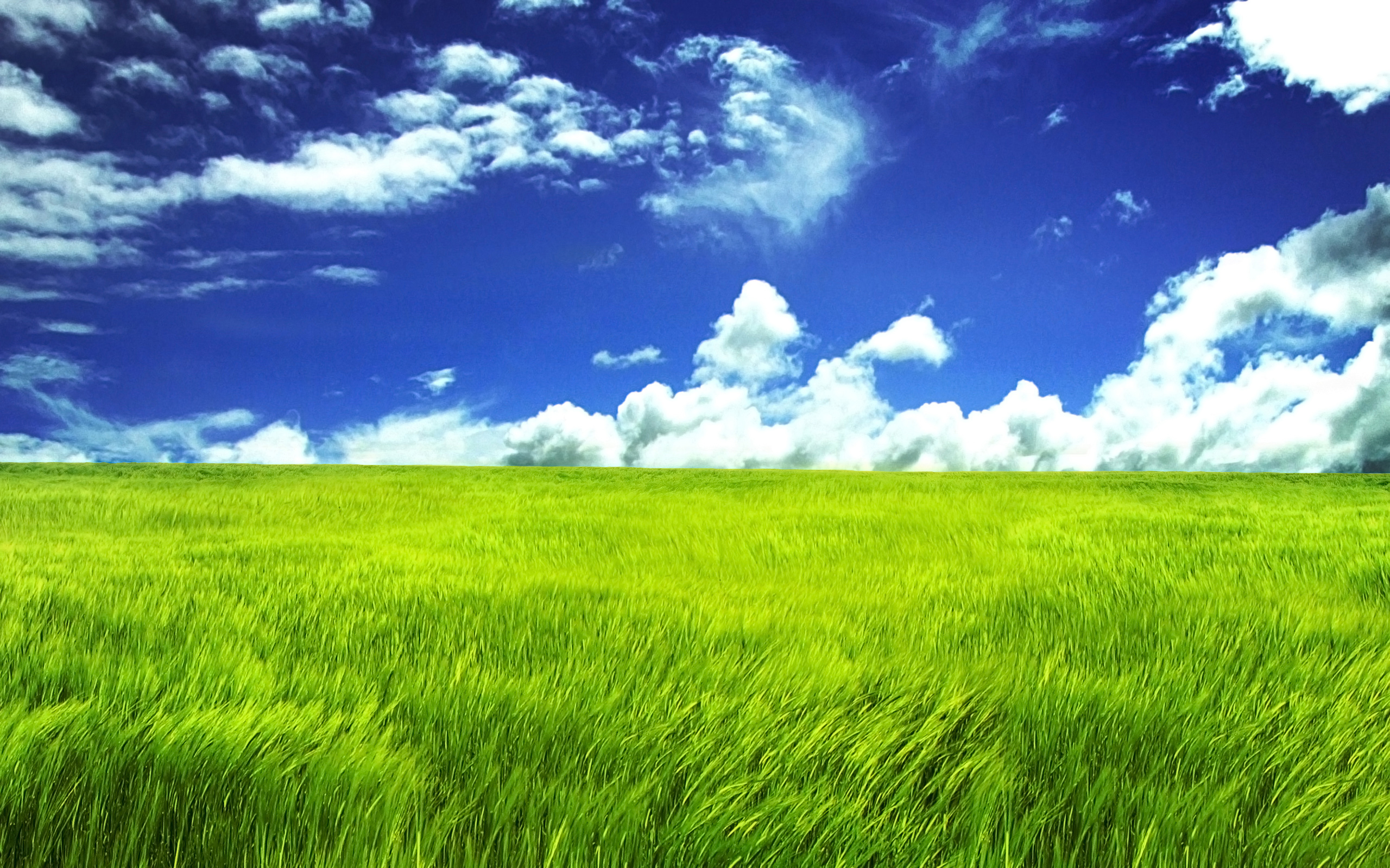Blue-Sky-and-Green-Field-2560x1600-wide-wallpapers.net
