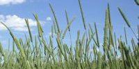 ahg-timothy-hay